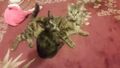 Отдам в добрые руки кошку и котёнка!