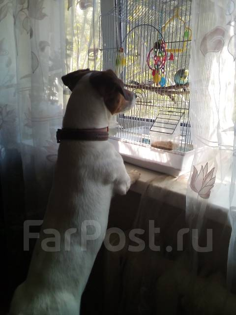 Передержка (зоогостиница) животных на дому, район столетия