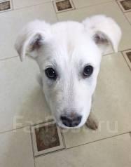 Отдаем в добрые руки прелестного хорошего щенка!