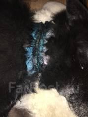 Собака попала в удавку и нуждается в лечении