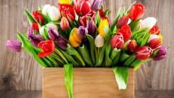 Тюльпаны. Под заказ