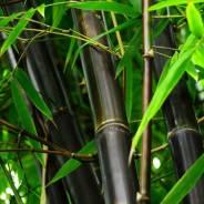 Бамбук. Под заказ