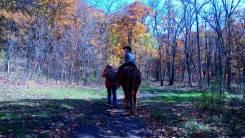 Конные прогулки по лесу. Детский маршрут 1,5 км - 250 р.