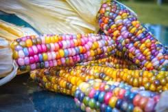 Кукуруза. Под заказ