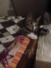 Котенок кот в хорошие руки