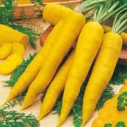 Морковь. Под заказ