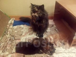 Отдам котят (кошек) бесплатно в хорошие руки во Владивостоке