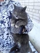 Отдам кота