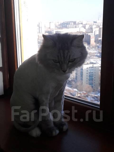 Стрижка кошек и котов ( Выезд на дом) ВЛ-К, Артем, Пригород. Грумер Ек
