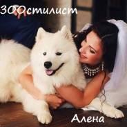 """ЗООсалон""""Стиляги""""на Русской 72""""В"""", стрижки, подготовка к выставке!"""