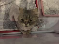 Милейшая мурчащая кошка ищет дом