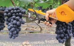 Тапенер - инструмент для подвязки винограда