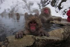 Япония. Gifu. Горнолыжный тур. Горящий ТУР: Незабываемый горнолыжный отдых в Японии!