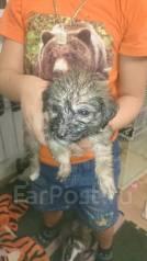 Срочно отдадим щенков в добрые руки)