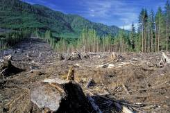 Выпилка леса