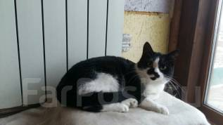 Отдам котов и кошек стерилизованных