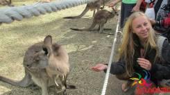 Обучение английскому в Австралии (22 дня) группа с руководителем