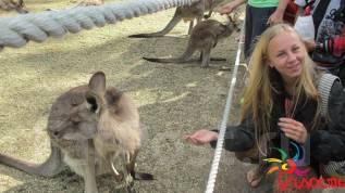 Обучение английскому в Австралии (22 дня)