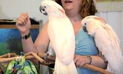 Попугаи Какаду.