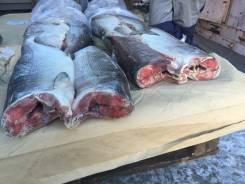 Св. мороженная рыба - Горбуша, кета
