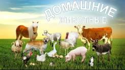 Сельскохозяйственные животные.