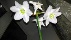Отдам бесплатно красивый большой цветок