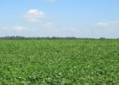 Плодородная с/х земля 39 га со скидкой 40%. 390 000 кв.м., собственность, электричество, вода, от частного лица (собственник). Фото участка