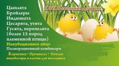 Куры, индюшки, утки- инк. яйцо из России, Чехии, Европы. Под заказ
