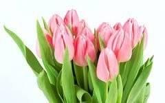 Продавец. Продавец цветов в праздничные дни 7,8 марта 2017г. ИП