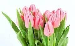 Продавец. Продавец цветов в праздничные дни 7,8 марта 2017г