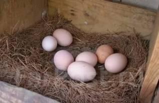 Яйца. Под заказ
