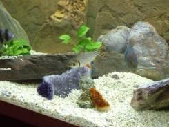 Грунт для аквариума от 1 кг