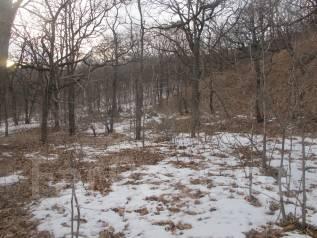 Продам земельный участок в п. Андреевка Хасанского района. 10 000 кв.м., от частного лица (собственник). Фото участка