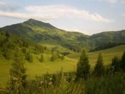 Продается 253 га земли с/х назначения в 65 км. от Белокурихи. 253 000кв.м., собственность, вода