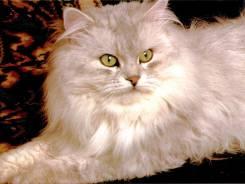 Передержка кошек и котов во Владивостоке и Артеме на дому