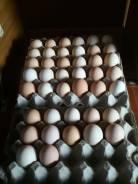 Яйцо инкубационное. Под заказ