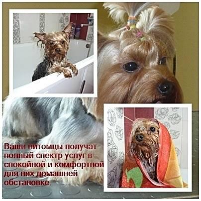 Стрижка собак (р-н 100-летие), опыт работы более 15 лет.