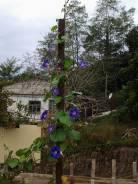 Земельный участок на берегу реки Кирпили. 2 450 кв.м., собственность, электричество, вода, от частного лица (собственник)