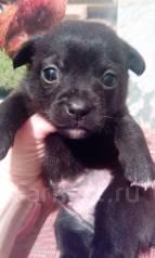 Отдам щенка от маленькой собачки