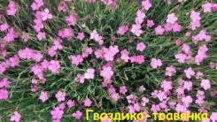 Гвоздика-травянка 2 сорта