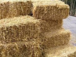 Куплю солому пшеницы, овса