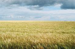 Участки сельскохозяйственного назначения. 20 000 кв.м., собственность, электричество, вода, от частного лица (собственник)