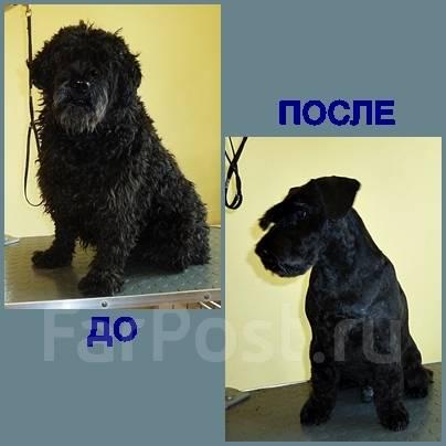 Стрижка собак, район 100-лет Владивостоку, опыт работы более 15 лет.