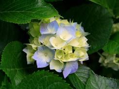 Продавец-флорист. Срочно требуется продавец цветов. ИП Нарицына Е.И. Улица Черемуховая