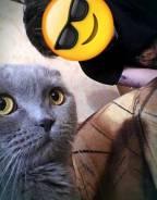 Вязка кошек.