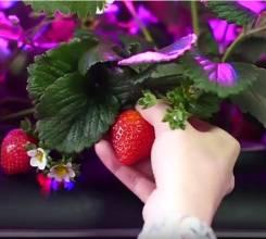 Домашние агрофермы для выращивания ягод и овощей в домашних условиях. Под заказ