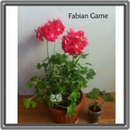 Продам Fabian Game