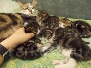 Отдам котят в хорошие руки!