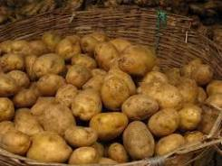 Куплю домашний картофель в неограниченном количестве