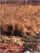 Продам земельный участок на Золотарях. 1 000 кв.м., собственность, от агентства недвижимости (посредник). Фото участка
